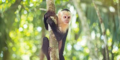 Costa Rica Family Experience (G Adventures)